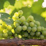Витамины в зеленом винограде