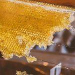 Как едят мёд в сотах?