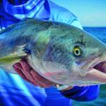 Кахавай: что за рыба?