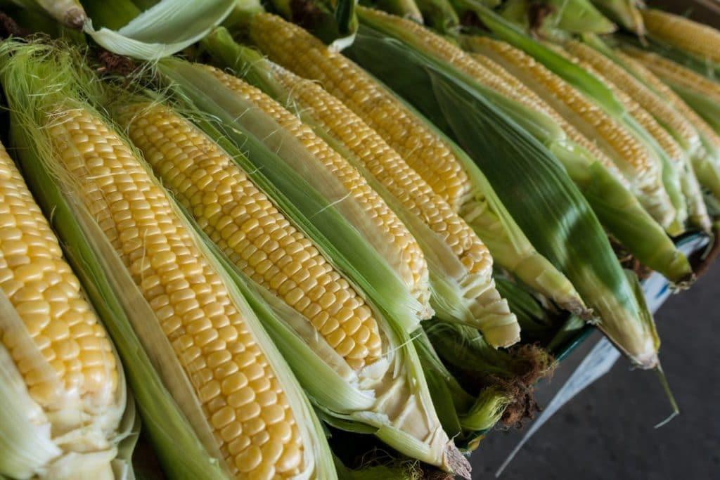 Как узнать, что кукуруза созрела?