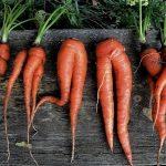 Почему вырастает корявая морковь?