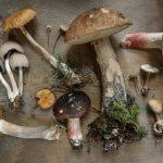 Как правильно: срезать или выкручивать грибы?