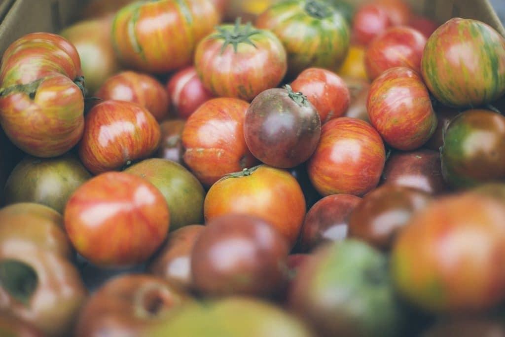 Сколько воды в помидоре?