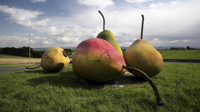 Почему плоды груши трескаются?