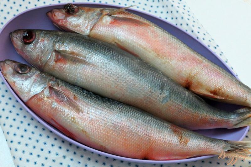 Красноглазка: что за рыба, как готовить?